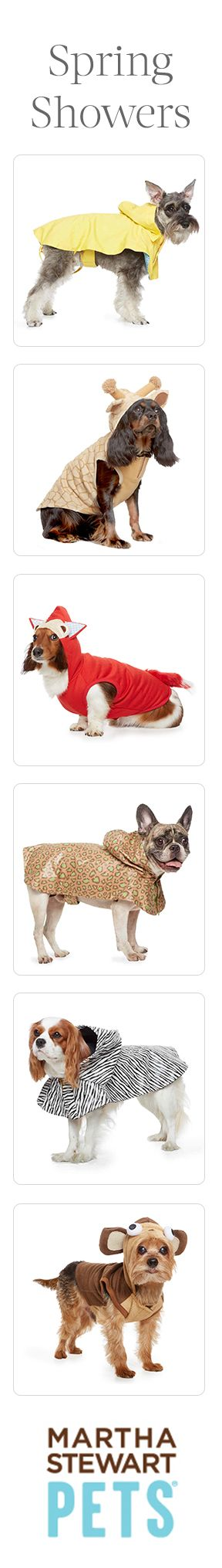 Avoid April Showers with spring apparel that protects your pet. Spot the cavalier