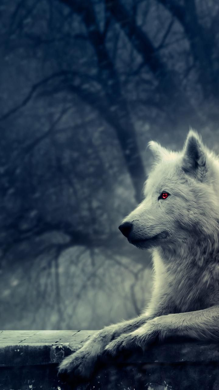 Animal Rights Wallpaper Ghost Wallpaper Gameofthrones Jonsnow Direwolf
