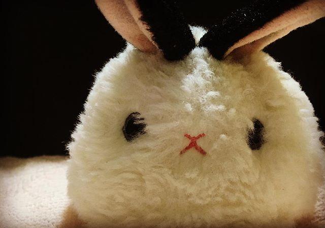 こんにちはライターの津田沼美沙です 今日も一日お疲れ様でした 我が家のしろらびだんごちゃんもあなたのことを見てますよ うさぎ bunnylover rabbit バニラバ うさぎのいる暮らし うさぎのいる生活 ぬいぐるみ