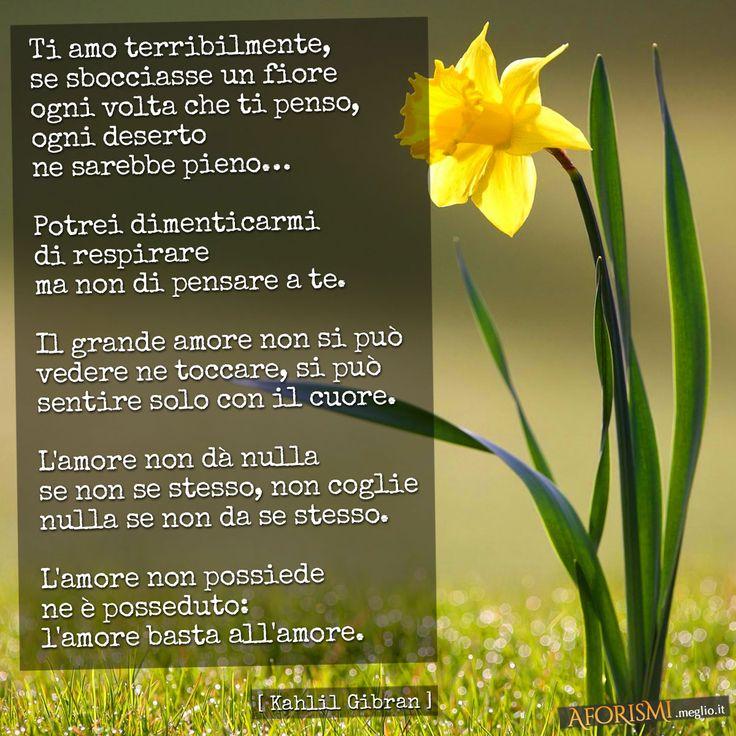 Immagine di http://aforismi.meglio.it/img/frasi/social/gibran-ti-amo-terribilmente-amore.jpg.