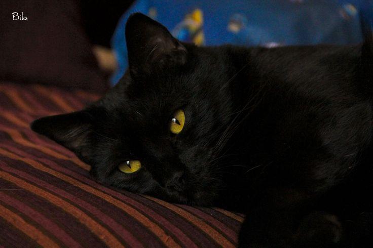 Calimero riposa sul divano ma con gli occhi ben aperti !