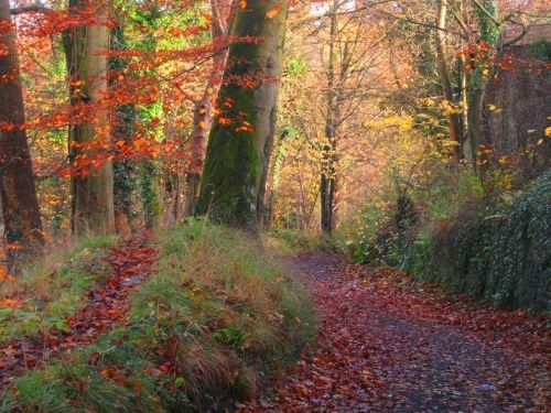 Autumn through Over Hacking Woods along the River Hodder at Hurst Green, in Lancashire.