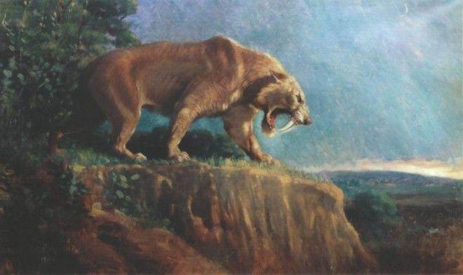 Tiger Sabre Tooth Tiger Vahana Da Radha Abre Portais Cristal Gems Sabedoria Aslam Narnia Voa Fala Animales Extintos Animales Prehistóricos Felinos