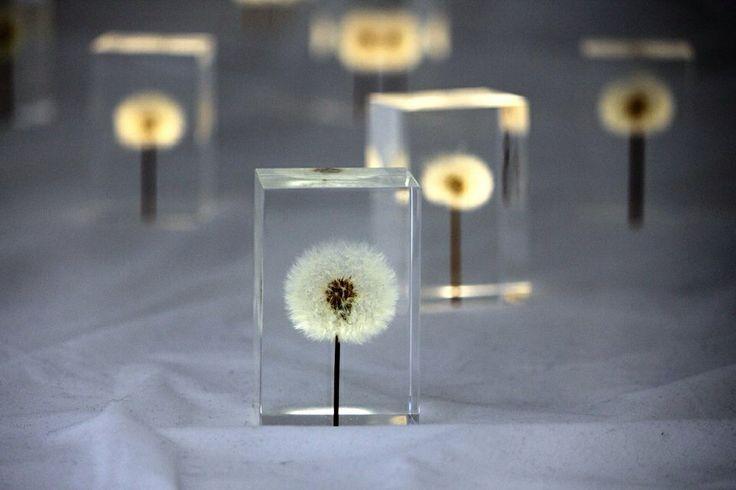 Flowers at Design Week