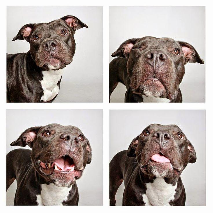 Imaginary World: Sociedad Protectora de Animales de Utah realiza instantáneas de perros adoptables en una cabina de fotos