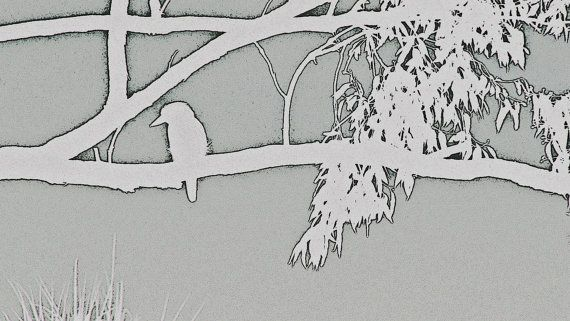 Kookaburra on Branch Outline Solid Grey by BlackbirdArtDesign, $35.00
