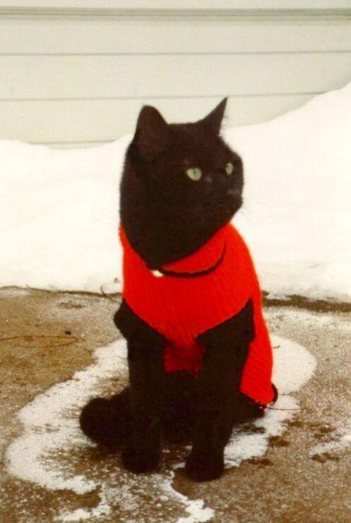Cat Christmas Sweater Uk