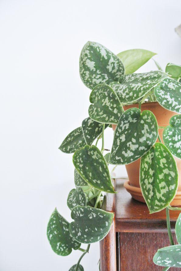My Attic succulent greens hanging plant 980