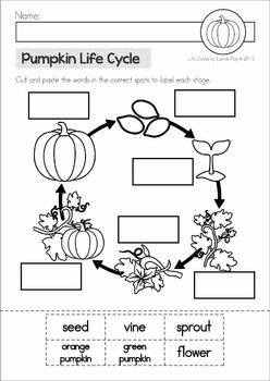 Frog Life Cycle cut and paste unit. A page from the unit: cut and paste the pumpkin life cycle stages