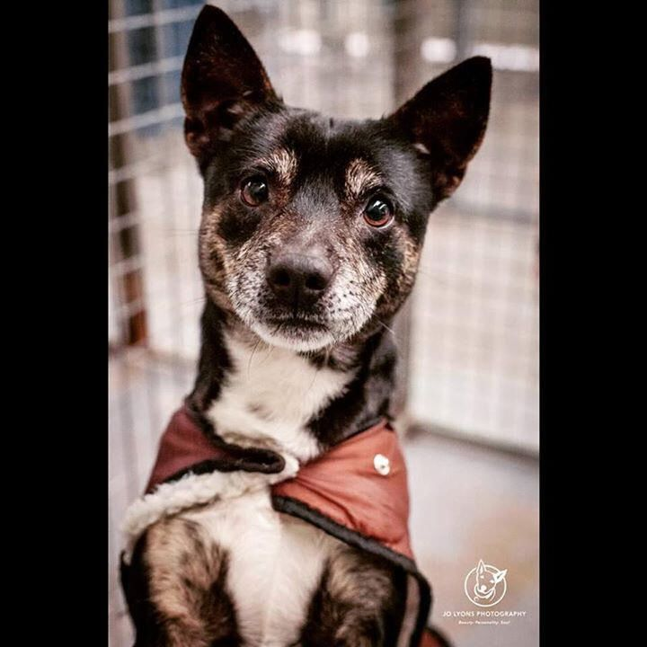Love me? Adopt me? My name is Mallie and my family surrendered me to #Renburyfarmanimalshelter. I am only a small boy and very loving. Please share my photo and help save my life <3