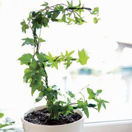 Leafy Letter E Topiary
