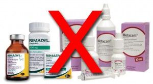 Metacam side effects | Rimadyl side effects | NSAIDs for dogs | Pooch and Mutt