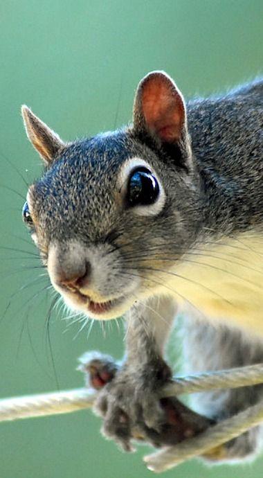 squirrel showing off his balancing skills
