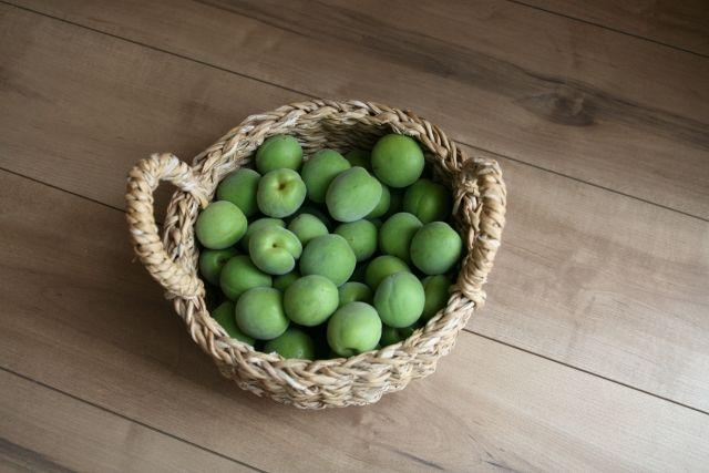 6月になると収穫時期ということもあり、スーパーでも #青梅 がたくさん並んでいます。昔ながらの #食文化 である「 #梅仕事」の季節ですね♪  梅仕事とは、その年に収穫した梅の実を使って、梅酒や梅干しなどをつくることです。梅には、#美容効果 #冷えの改善 #ストレス #不眠 の解消 など嬉しい効果がたくさんあります。  昔ながらの食文化を楽しみつつ、#梅 のパワーを取り入れてみてはいかがでしょうか?