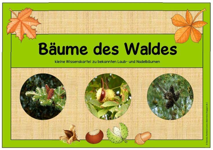 """Ideenreise: Wissenskartei """"Bäume des Waldes"""""""