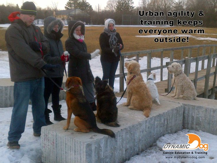 Too cold out? Not for these guys! Getting your dog outside and exercised in the winter means adding more than just a shuffle down the icy sidewalk. Get involved and find out how to re-define your dog walk!
