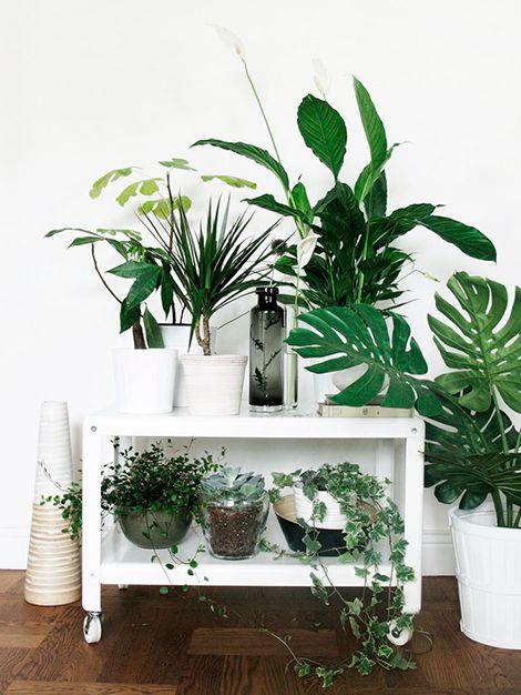 Dit weekend maken we een mini-tuin in huis met cactussen en vetplantjes / www.woonblog.be