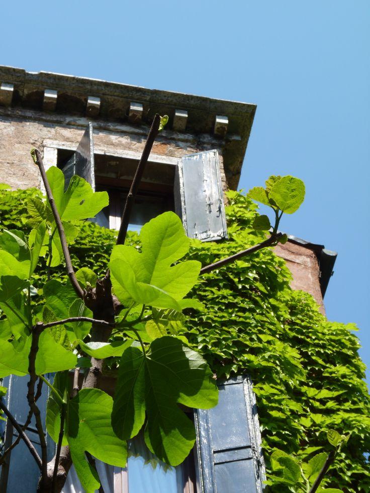Hotel Flora Venezia Tripadvisor