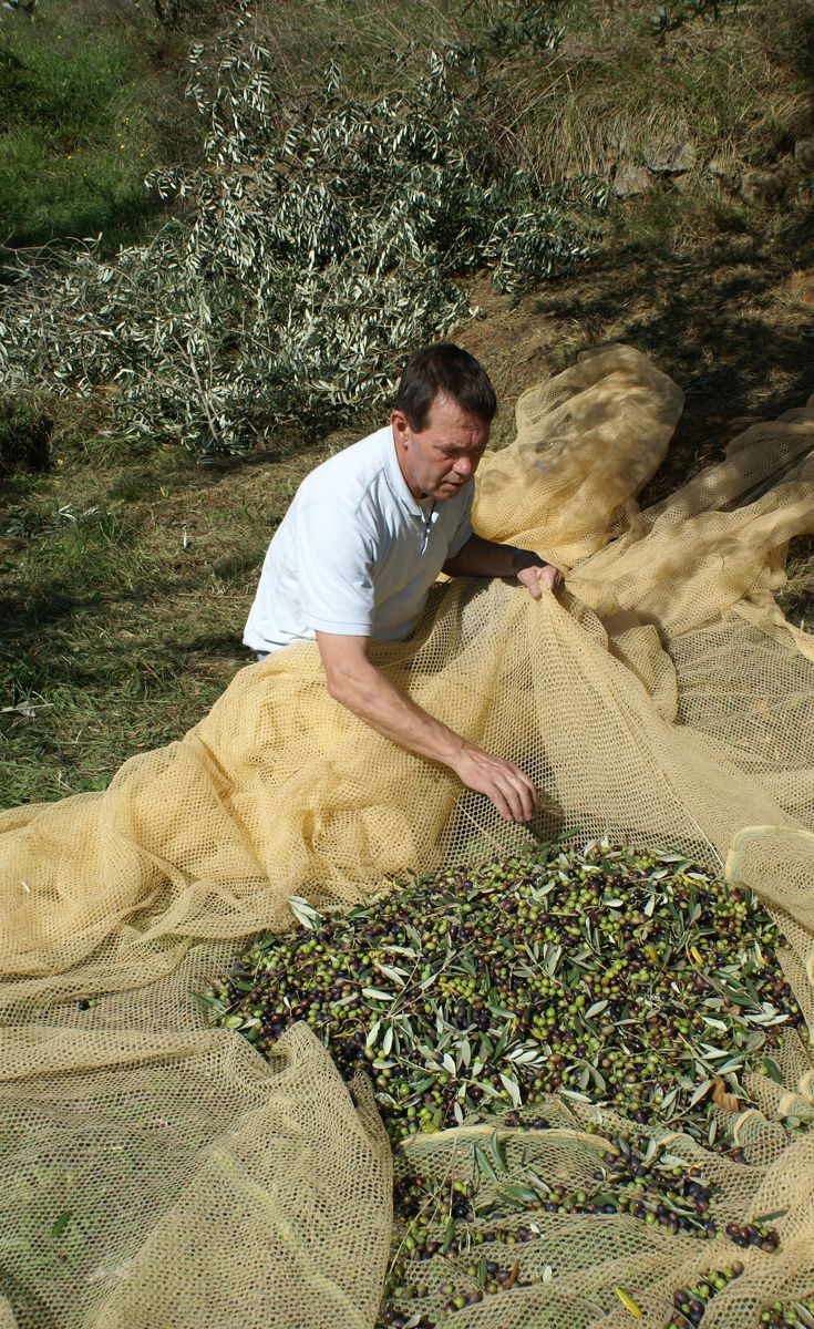 It is time to collect all the olives. The amount of olives produced from each tree varies a lot.