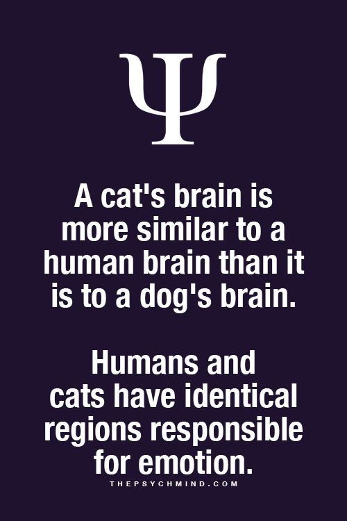 Cats & People