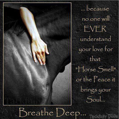 """Horse And Cowgirl Quotes 