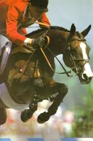 1000 Images About Show Jumping On Pinterest Grand Prix
