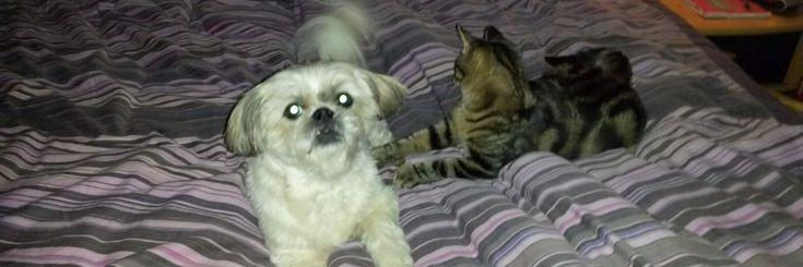 Welterusten...   Goedemorgen! Kusjes...   Knuffelen....        Lees meer         Ultieme beweging voor je kat, de robomop. Micky en het harig monster