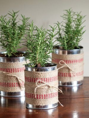 Tenha uma mini horta de temperos na cozinha!                                                                                                                                                                                 Mais