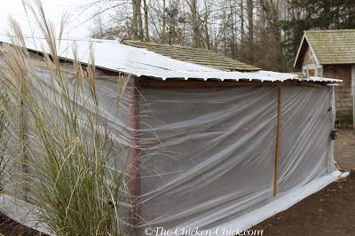 Bales of straw or hay should not be placed inside the chicken coop as insulation. Mold and fungus can grow inside the bales and create a respiratory disaster area inside the coop, in particular, Aspergillosis (brooder pneumonia). Far better to have a cold coop than sick chickens.