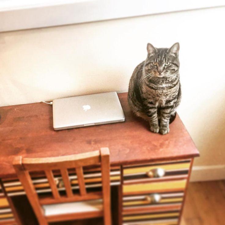 #desk #cat