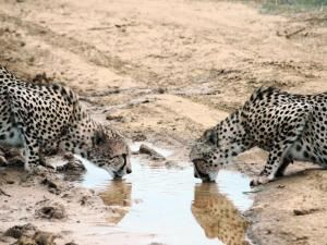 January 19 Saturday Star Travel section. Picture taken at at Madikwe Game Reserve