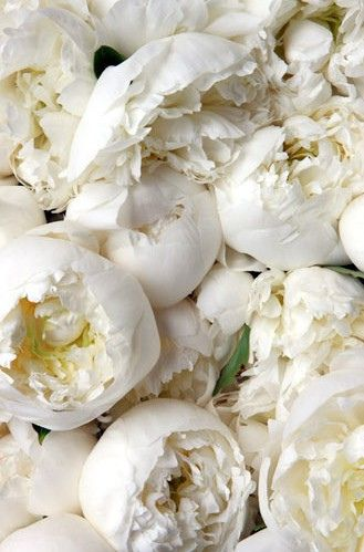 peonies, white