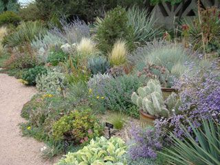 57 best DesertWaterwise Garden Design images on Pinterest