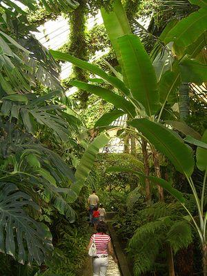 Things to Do near Paseo del Prado: Real Jardin Botanico