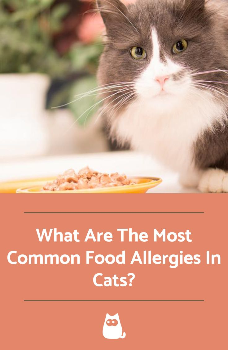 Most Common Food Allergies In Cats