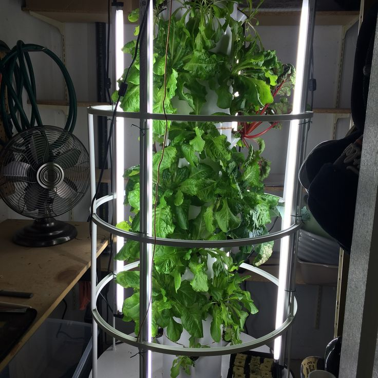 1000 images about tower garden vertical aeroponic for Grow vertical garden
