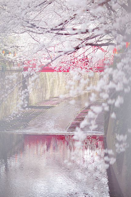 Cherry blossom, Meguro River, Tokyo, Japan. Amazing! I want to visit Japan soooooo bad! Maybe even study there in college! #Resources Galore
