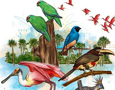 "Check out new work on my @Behance portfolio: ""AVES / BIRDS CASANARE - ILLUSTRATION"" http://be.net/gallery/52443479/AVES-BIRDS-CASANARE-ILLUSTRATION"