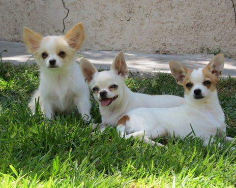 Y tú, sabes por qué tu perro tiembla tanto? Da click en el enlace y descubre porque www.animalcard.com.mx