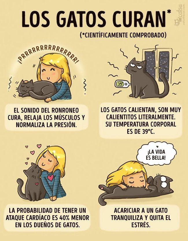 Cómic gato en casa, beneficios de tener un gato
