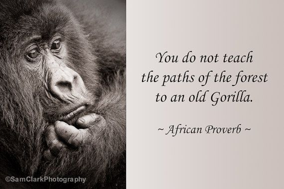 17 Best Images About Quotes African Proverbs On Pinterest: 292 Best African Proverbs And Sayings... Images By