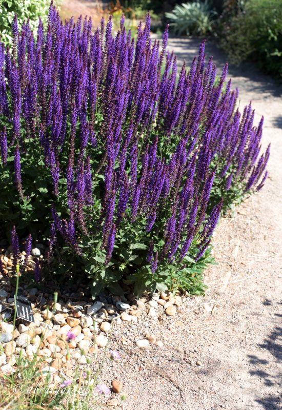 17 best images about purple garden on pinterest gardens. Black Bedroom Furniture Sets. Home Design Ideas