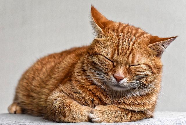 Penyebab Kucing Tidak Mau Makan Dan Tidur Terus Kucing Betina Piaraan Kucing