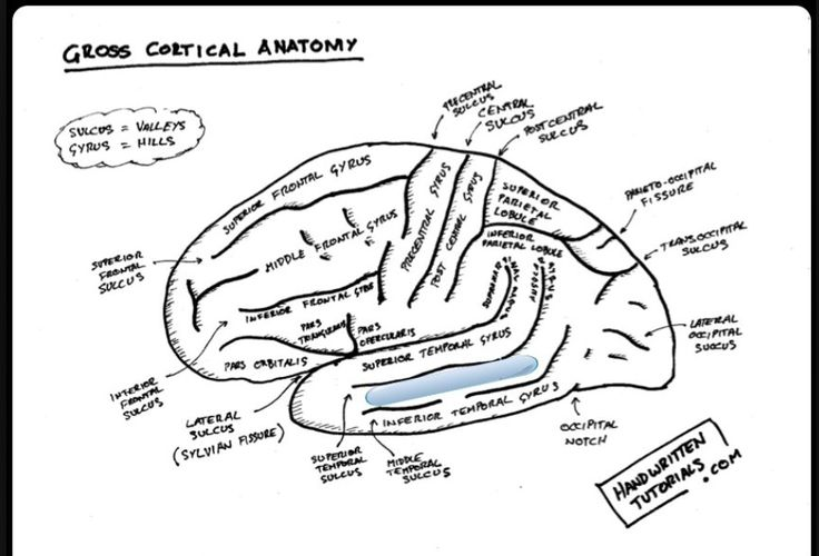 47 best Anatomy and Physiology images on Pinterest