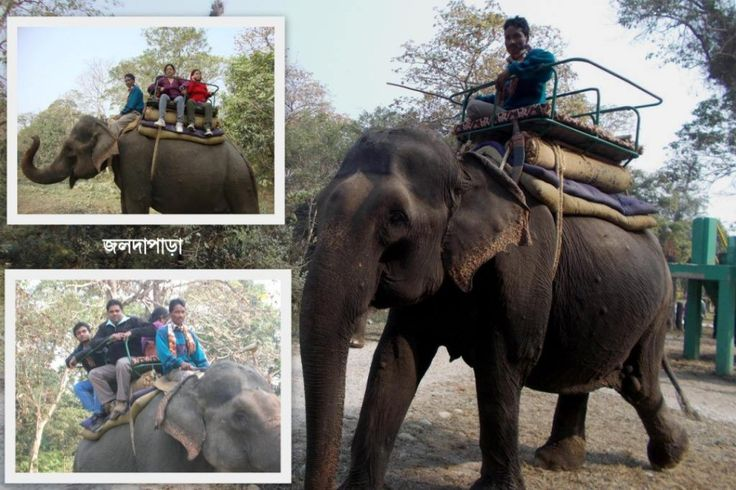 Jaldapara :- First time in my life I have done safari of an animal http://www.exploretours.in/first-time-in-my-life-i-have-done-safari-of-an-animal/ First time in my life I have done safari of an animal.Elephant safari is most thrilling tour of my life..... #explore #tours #myfamilytravles #incredibleindia #india #nature #beauty #travel  #myindia #myclick #travelindia #traveler #bloggers #travellife #travelblogger #travelgram #capture #natureshots #travelphotografy #instatravelblog…