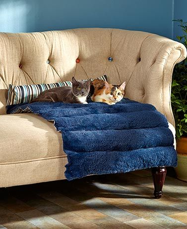 This Roll Up Padded Reversible Pet Bed Gives Your Furry Friend Their Very  Own Place