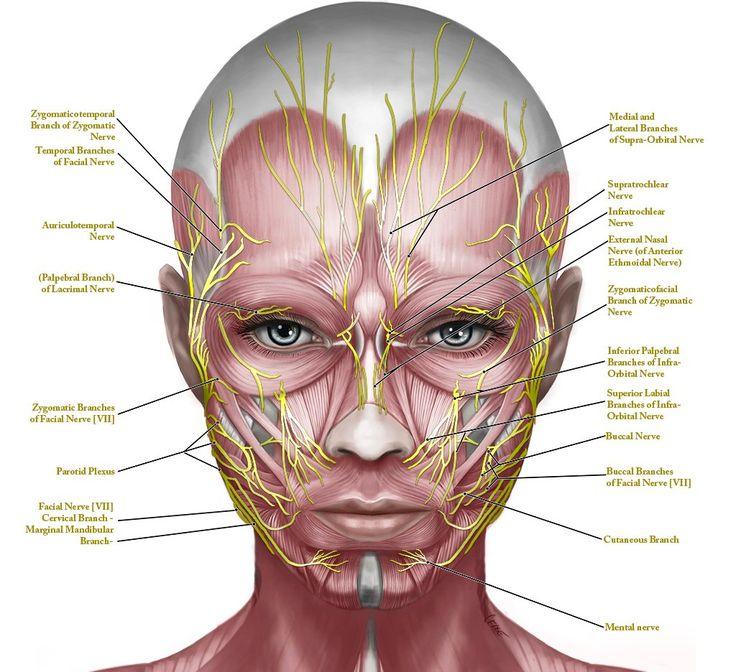 Регулярная практика сделает кожу лица мягкой, нежной и гладкой. Уменьшит морщины...