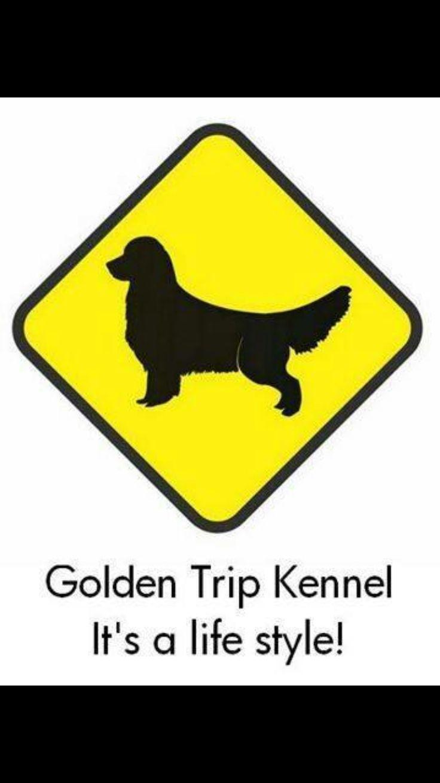 Canil Goldentrip (Criação Selecionada da Raça Golden Retriever)