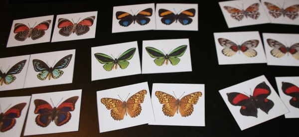 In preparation for our bug studies, I have made some new Butterfly Matching Cards. Print out 2 copies onto cardstock, laminate, & cut out. I found so many beautiful butterfly pictures that I went a little overboard. Depending on the skill level of your students, you may or may not want to use all of these cards.
