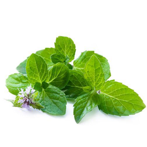 Qualche idea oltre a un buon mojito? Essiccate all'aria aperta i fiori e le foglie di menta, così potrete preparare delle tisane rigeneranti grazie alle sue proprietà digestive e tonificanti. #menta #digestivo